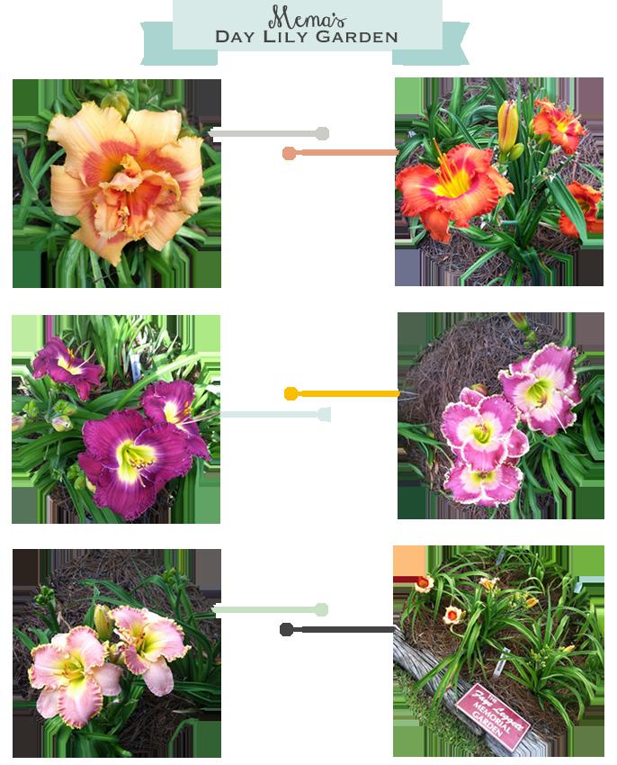 flowers-mema