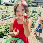 annual, strawberry pickin'